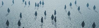 SEO bland Pandor och Pingviner